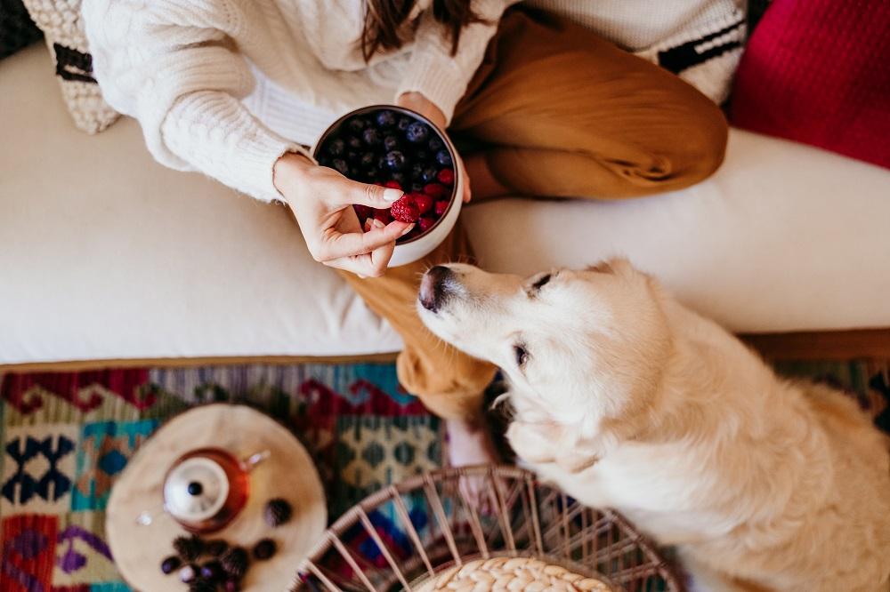 feeding dog fruits