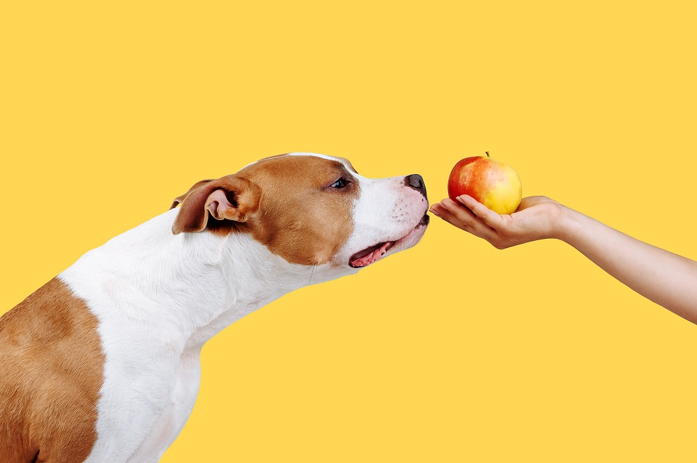 dog and an apple