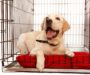Best Dog Crate for Pups, Adults, & Seniors: 2020 Buyer's Guide