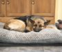 Best Dog Beds for Larger Dogs: 2020 Buyer's Guide