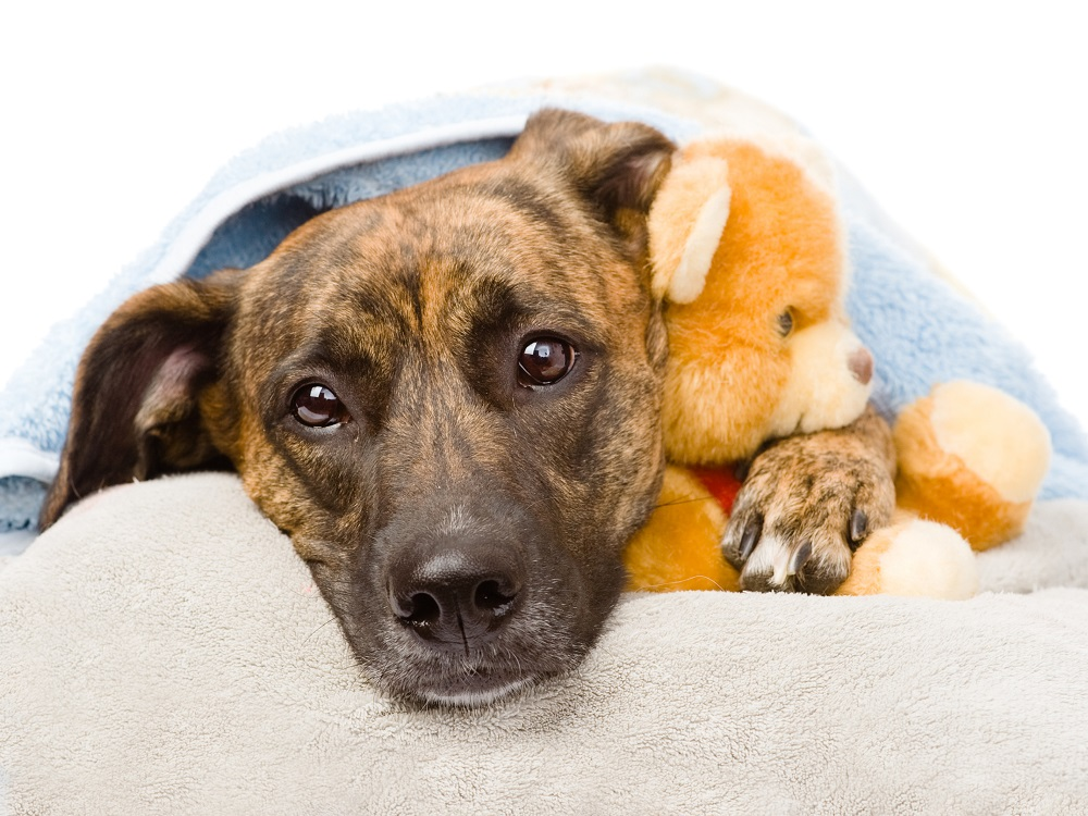 Dog hugs a stuffed toy