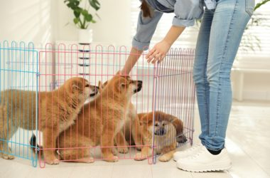 cute puppies in pen