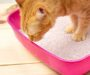 Best Cat Litter Box in 2021: Complete Buyer's Guide