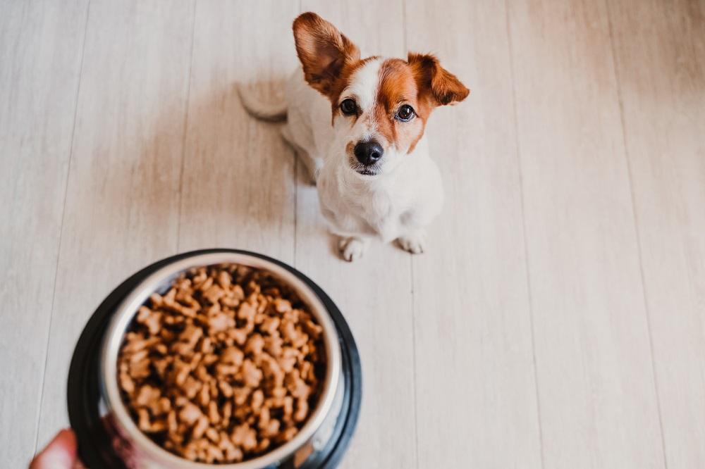 owner feeding the dog