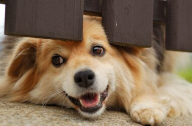Smiling dog under a fence