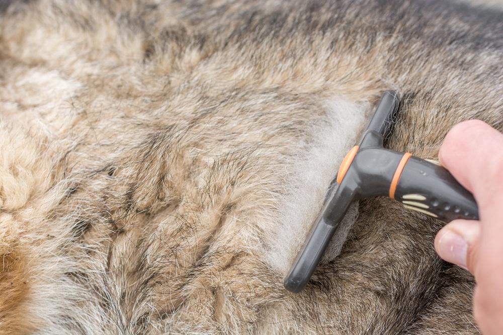 deshedding german shepherd