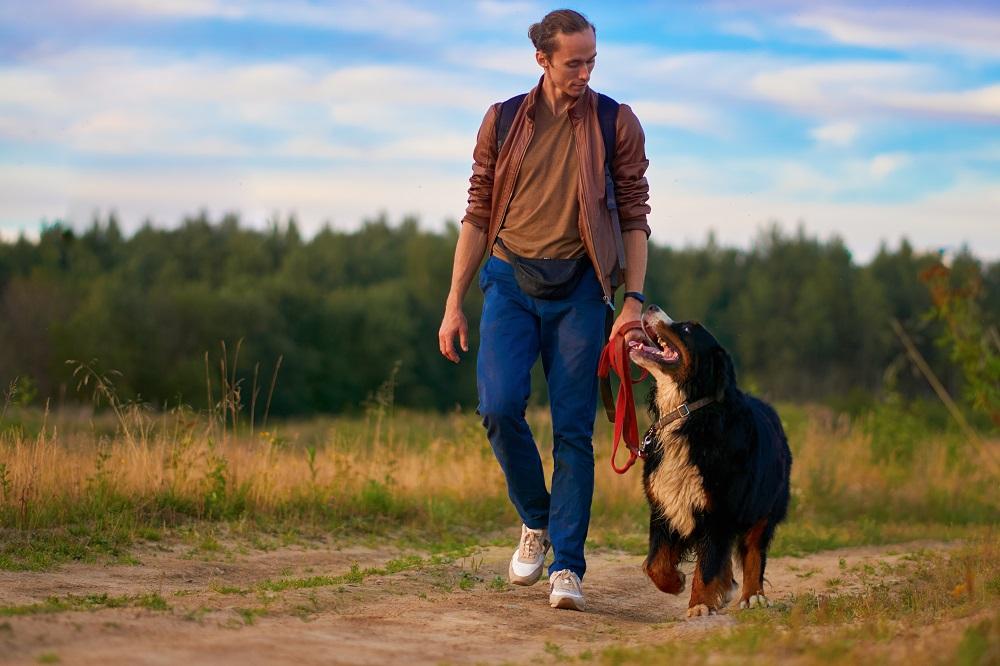 Dog walking in nature.