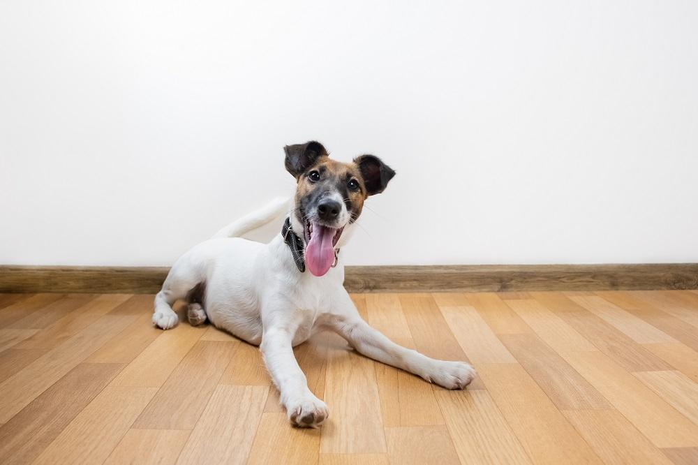 happy dog on the floor